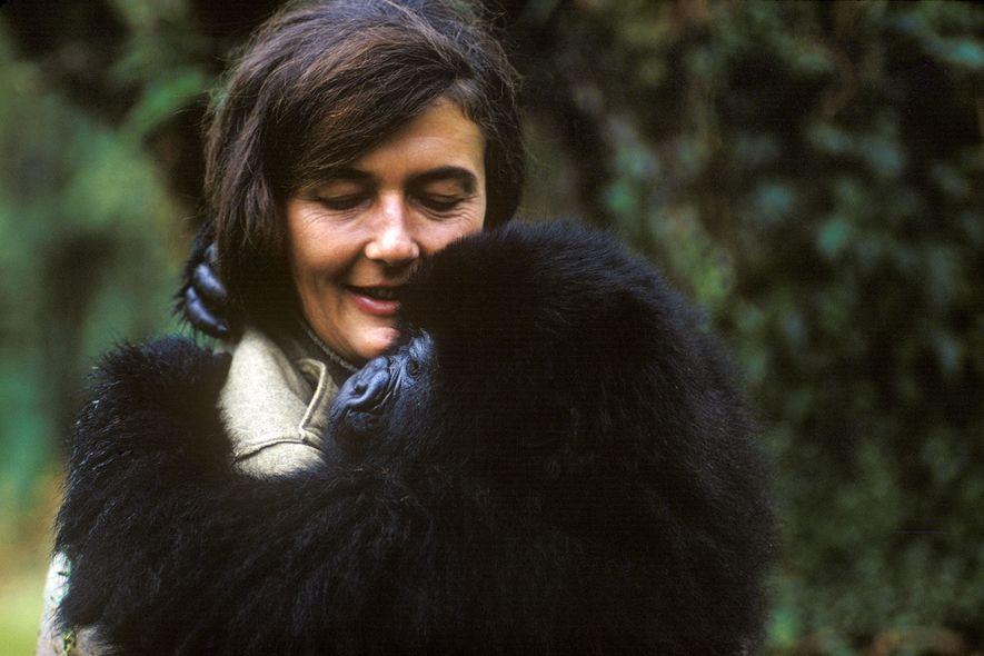 En 1967, Dian Fossey se mudó a la República Democrática del Congo para comenzar su investigación ...