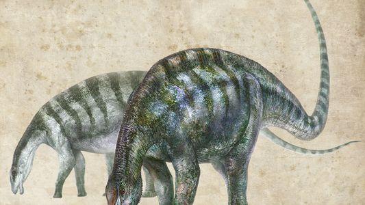 El «asombroso dragón» que replantea los orígenes de los dinosaurios más grandes del mundo