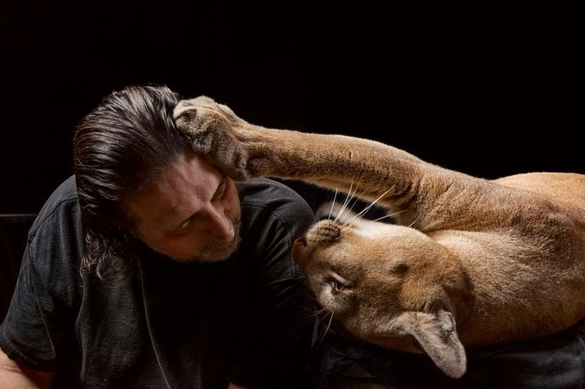 Sasha, un puma