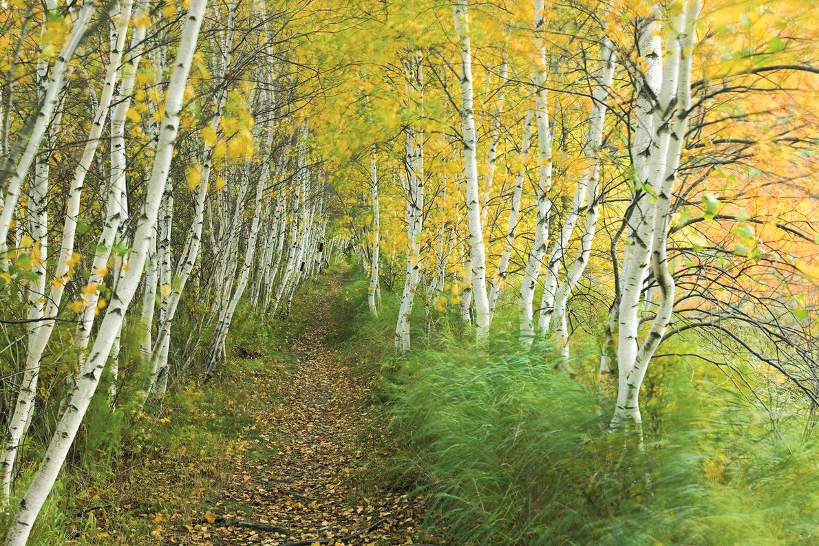 Un sendero cubierto de hojas
