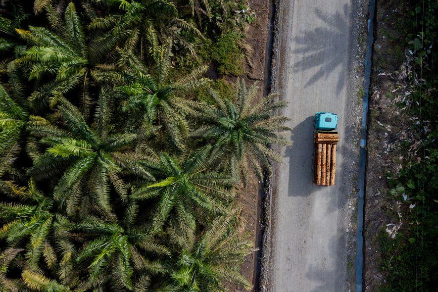 Según un informe de la FAO y el Banco Mundial de 2006, la tasa de deforestación de Ecuador se sitúa en noveno puesto a nivel mundial y es la más alta de Sudamérica. Ecuador también es el segundo productor principal de aceite de palma de Latinoamérica y el séptimo a escala mundial.