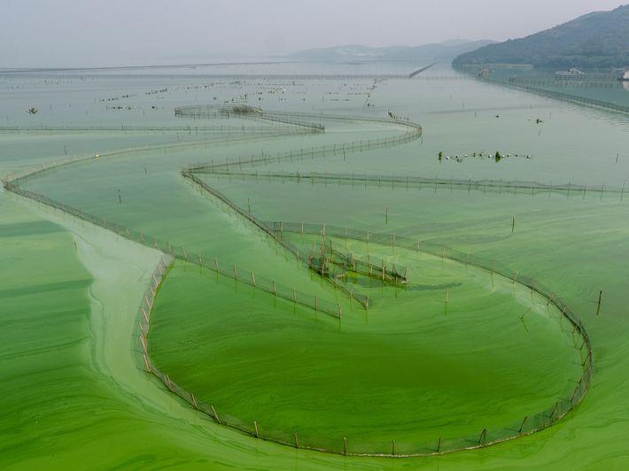 Lago Tai, China