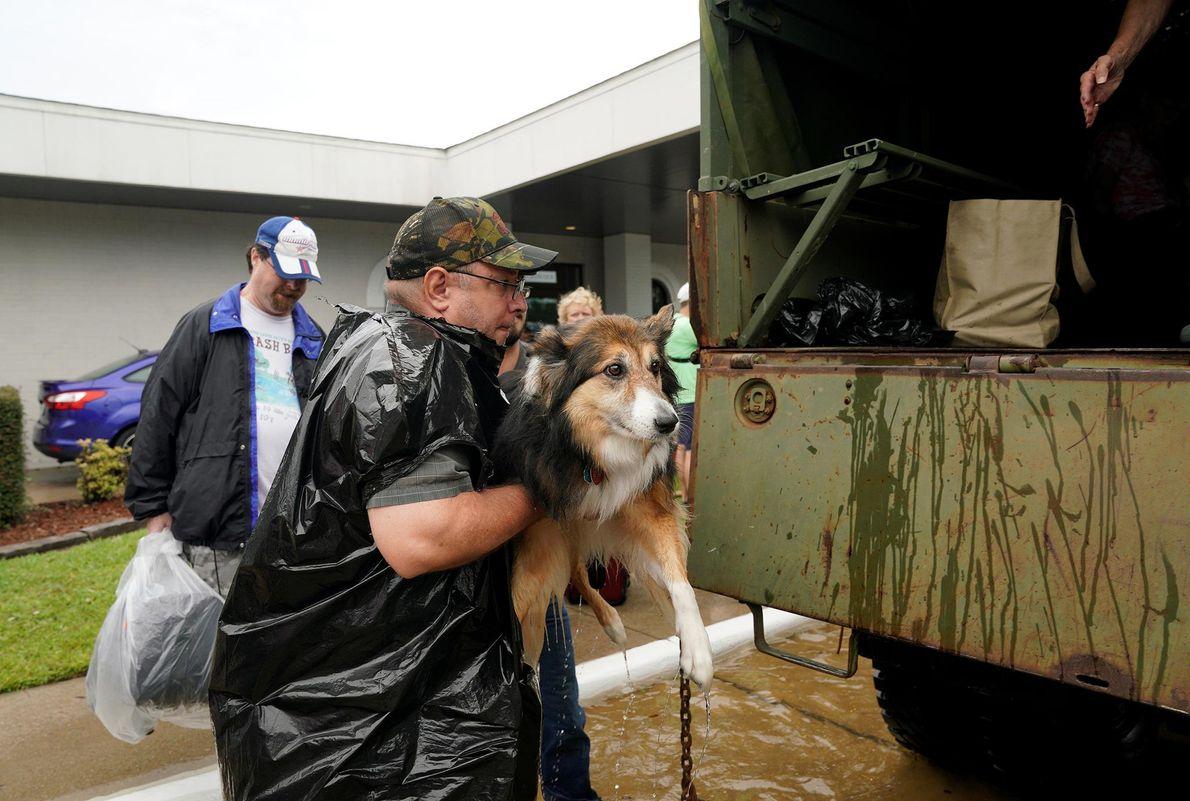 Los voluntarios cargan a las mascotas