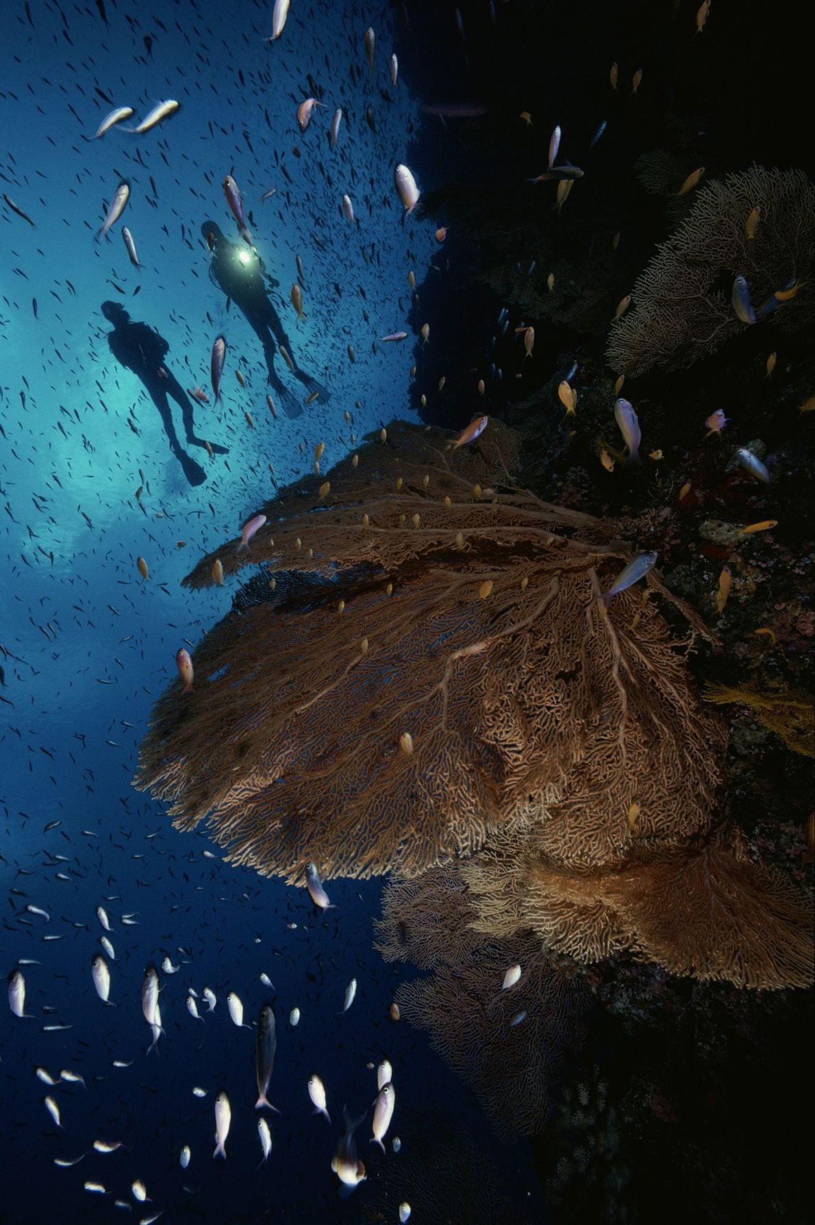 Pared de arrecife