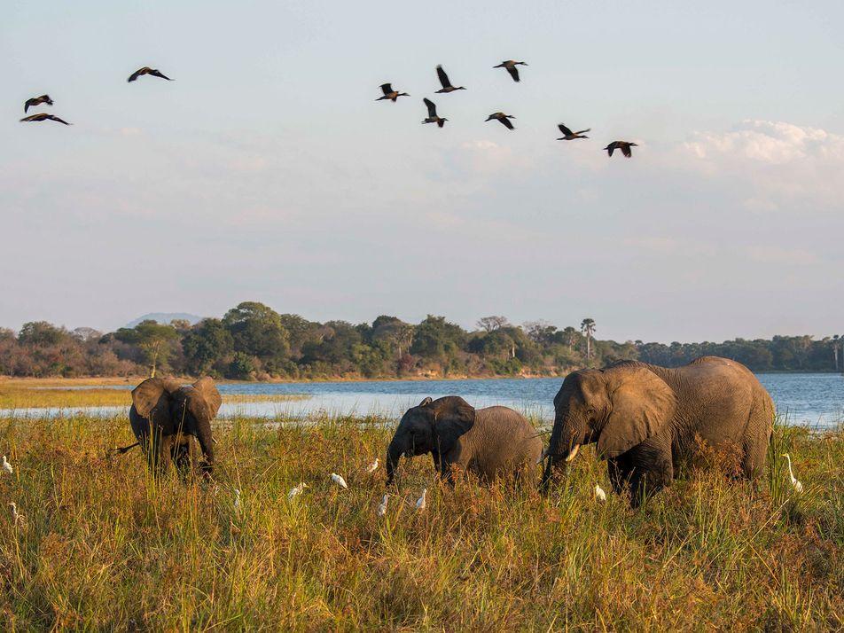 Las iniciativas del príncipe Enrique para preservar los parques africanos