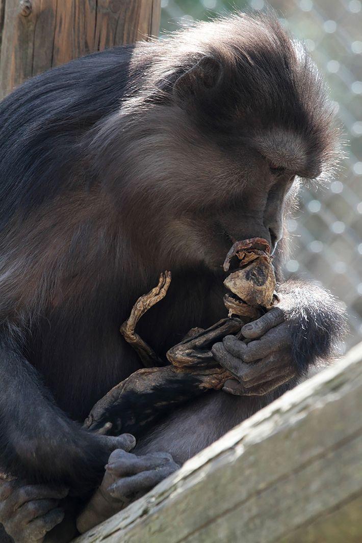 La madre primeriza intenta consolar al esqueleto