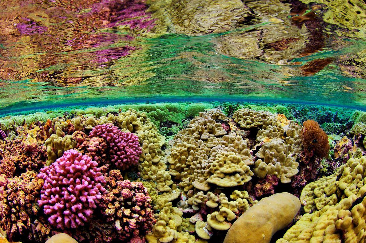 Arrecife Kingman