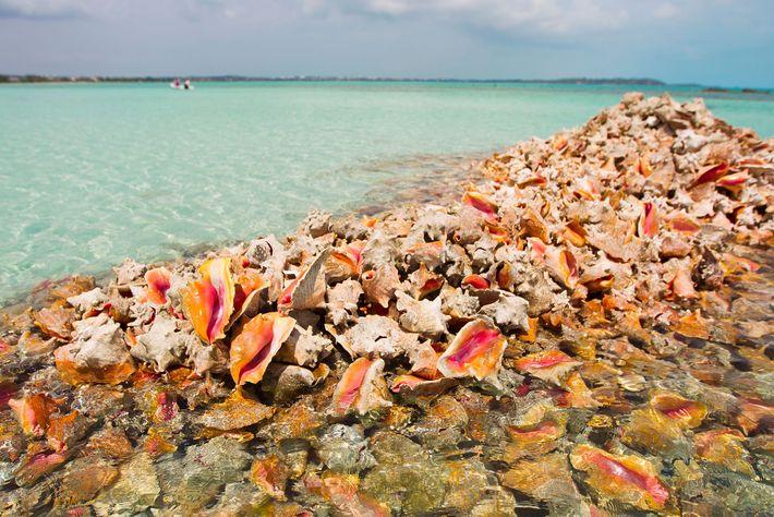 Montones de conchas