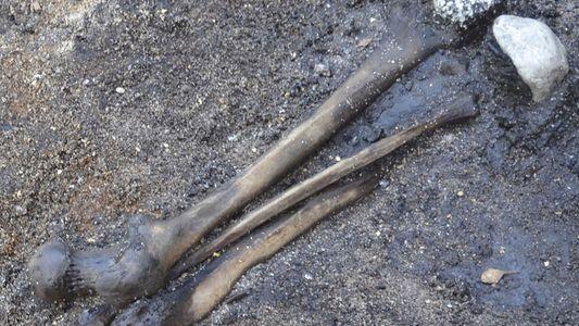 El hallazgo de miles de huesos humanos revela los rituales de batalla «bárbaros»