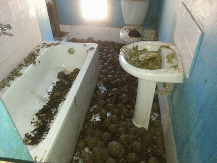 Las tortugas fueron retiradas de la casa y las están tratando en un centro de rehabilitación ...