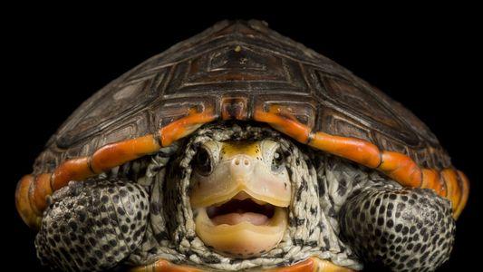 ¿Qué pasaría si desaparecieran las tortugas?
