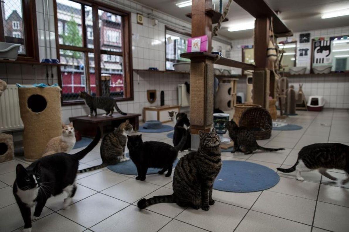 Los gatos a la hora de comer