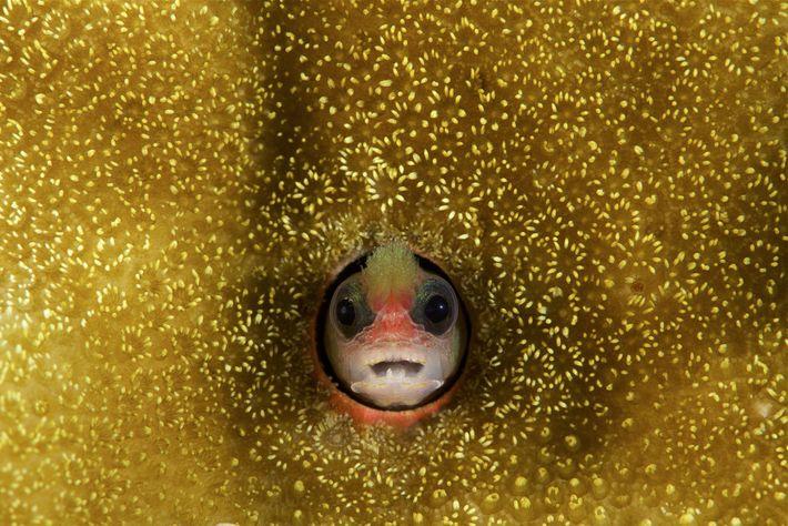 Mccoskerichthys sandae