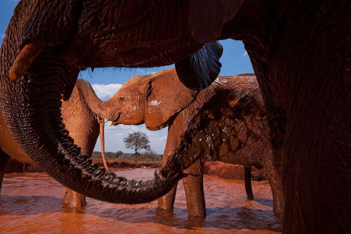 Elefantes huérfanos
