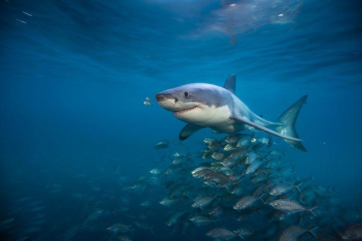 Exposición Sharks Brian Skerry 03