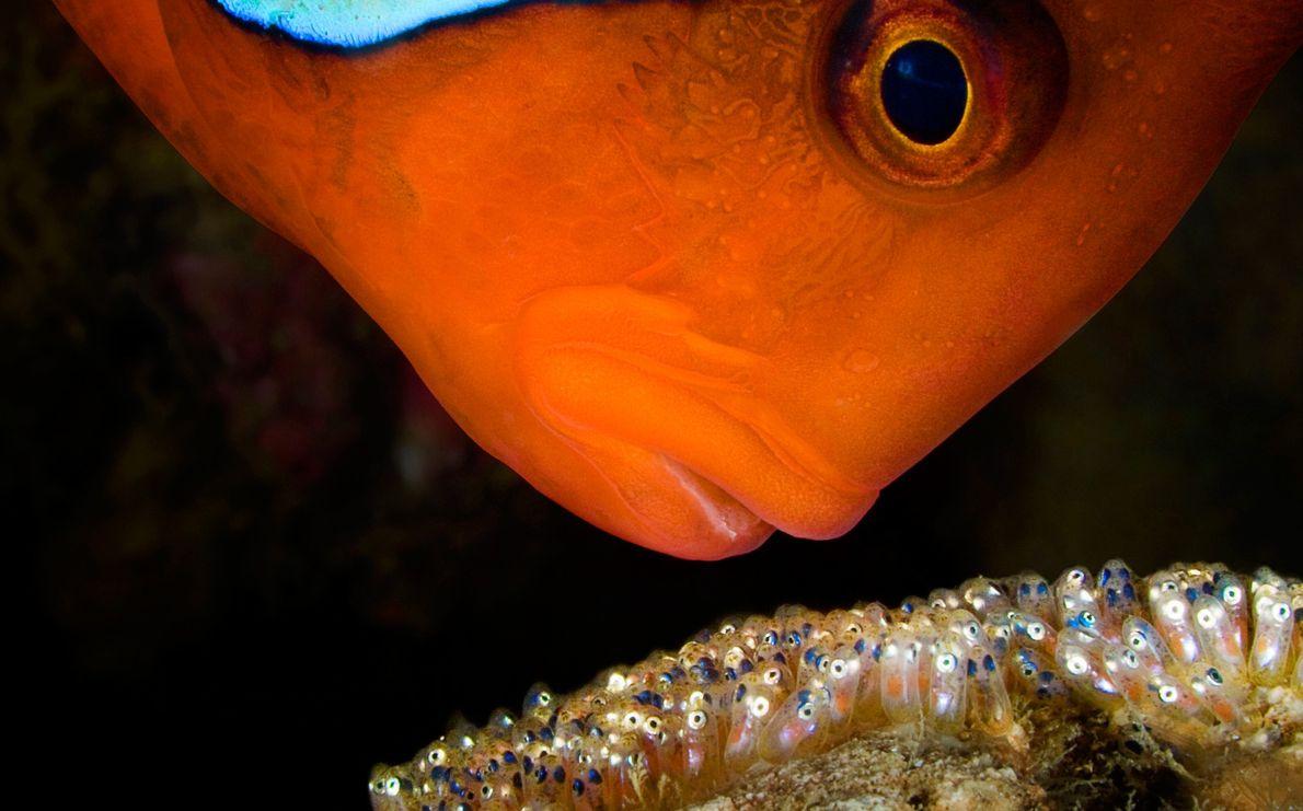 Centinela subacuático