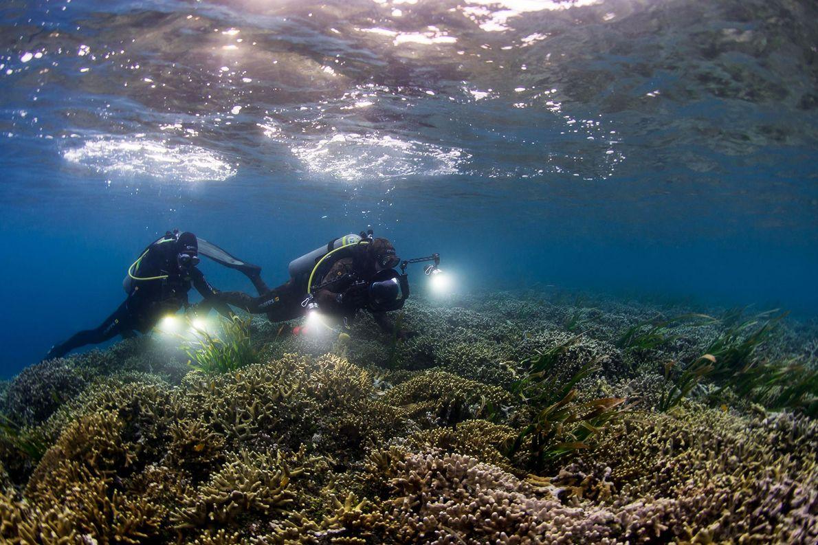 Buzos de Pristine Seas