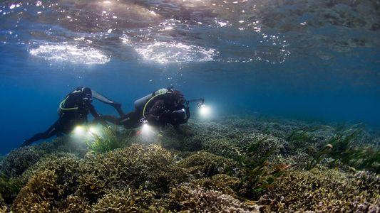 Pristine Seas: un viaje a la conservación de los paraísos salvajes del planeta