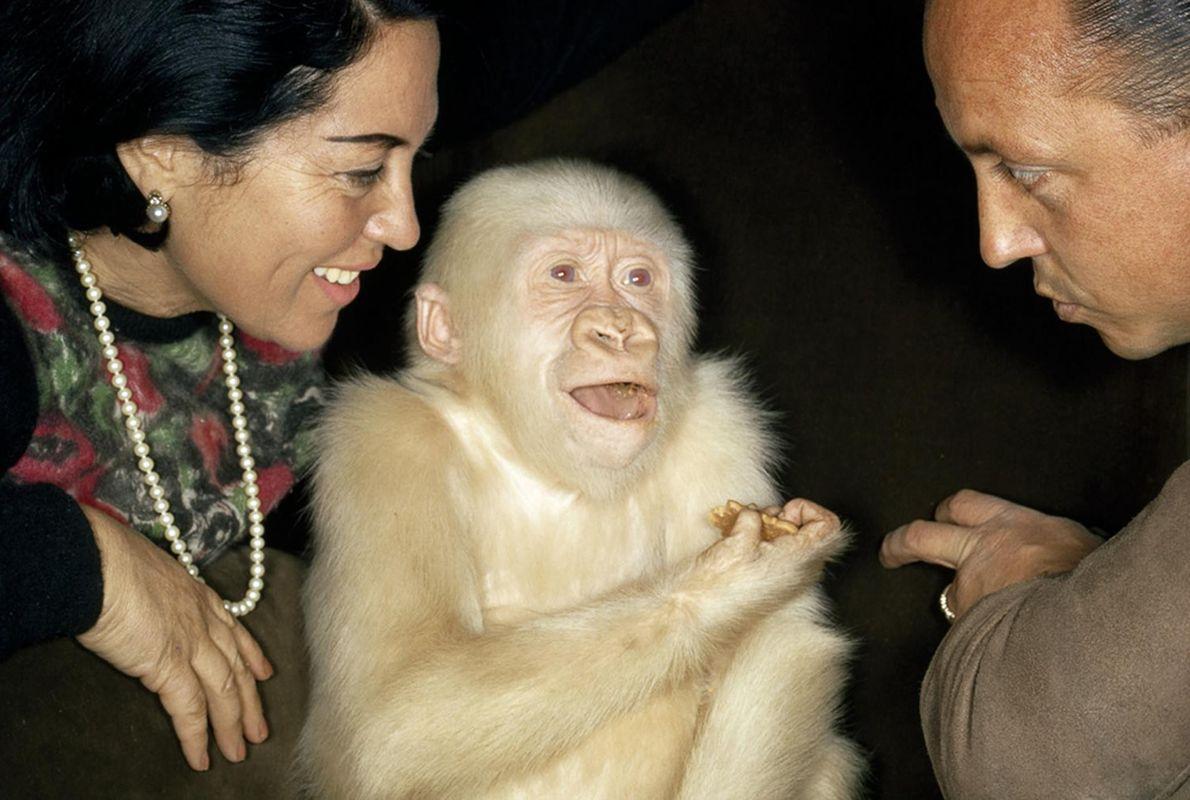 Mono albino