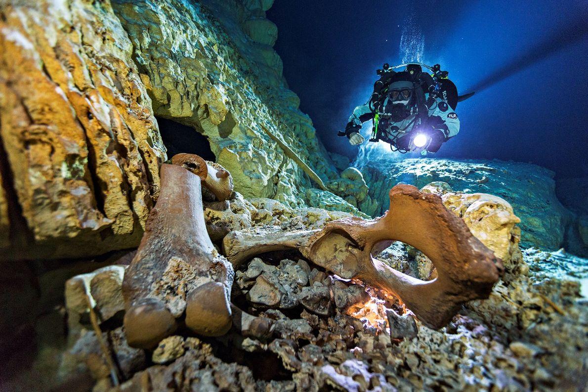 Uno de los esqueletos humanos más antiguos y completos descubiertos en el Nuevo Mundo fue localizado …