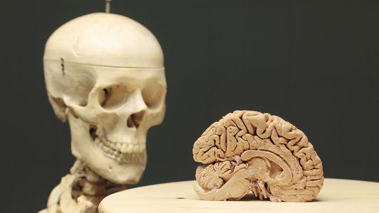 El vínculo cuerpo-cerebro