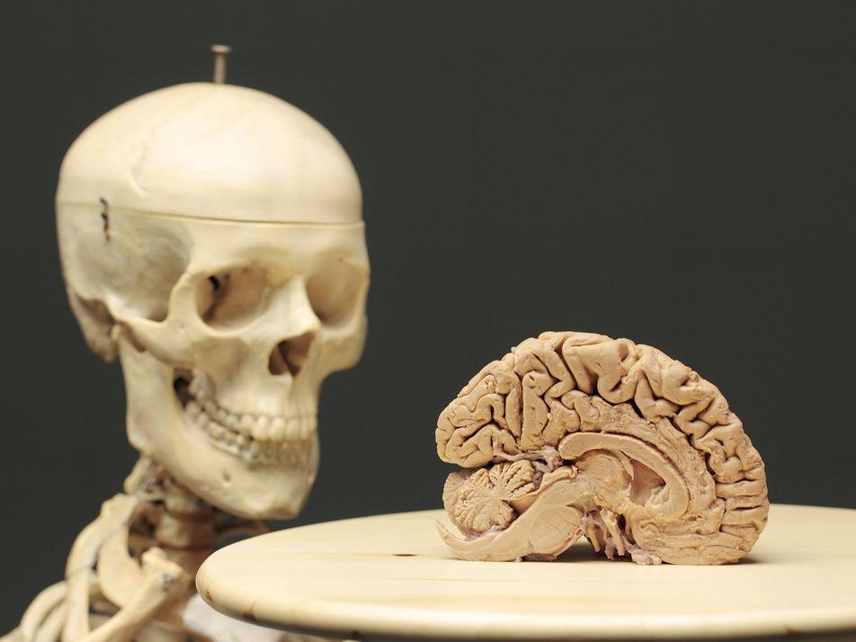 La conexión entre el cerebro y el cuerpo es más importante de lo que creemos