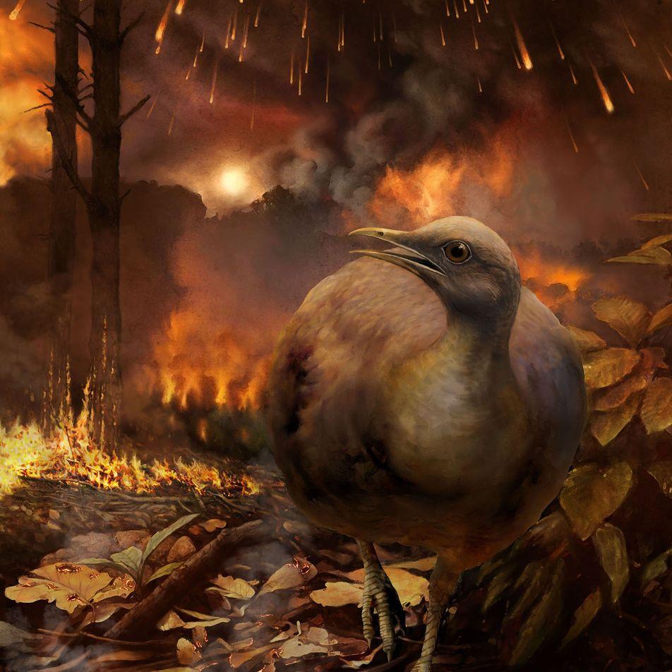 ¿Cómo sobrevivieron las aves de la era de los dinosaurios a la extinción masiva?