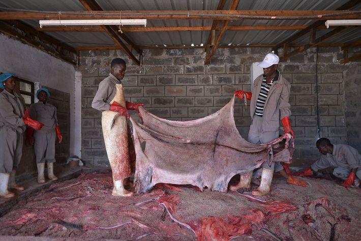 Los trabajadores preparan las pieles