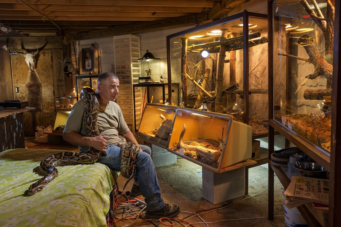 A Burmese python entwines Albert Killian in the Florida home he shares with 60 snakes. Tags ...