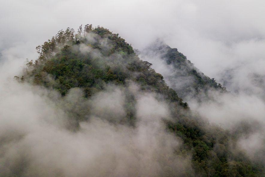 Los bosques tropicales del oeste de Ecuador forman parte de la región de Chocó, un punto caliente de biodiversidad. Bajo estas nubes, el área alberga al menos el 25 por ciento de la biodiversidad de flora mundial, así como especies de animales que solo viven aquí.