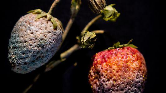 Estas esculturas de frutas podridas ponen de relieve la vulnerabilidad de las plantas
