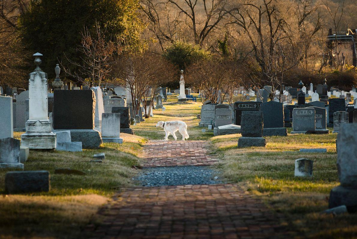 Cementerio del Congreso, Capitol Hill