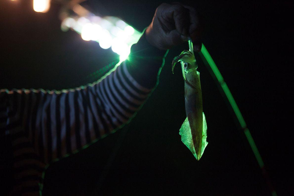 Pesca de calamar