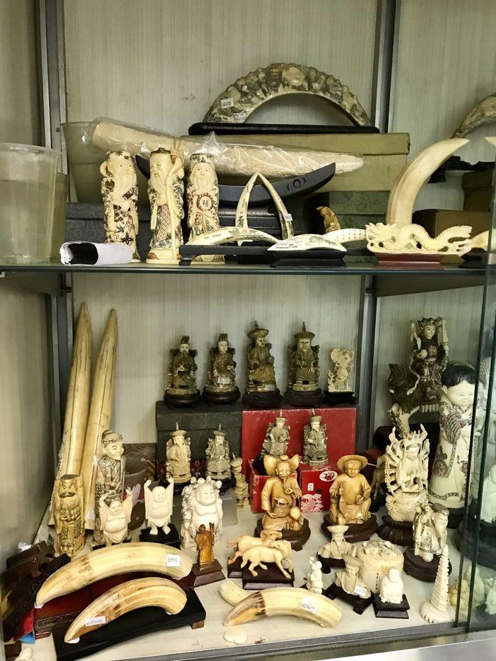 Los dientes y las tallas de hipopótamos
