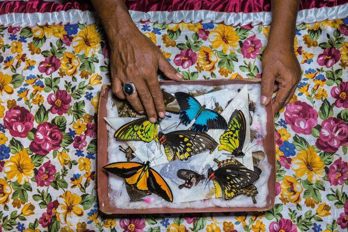 Cazadora de mariposas