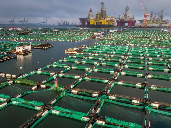 Pepinos de mar, Yantai, China