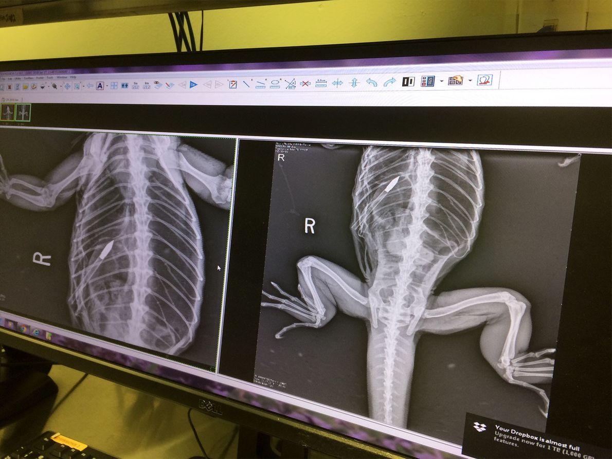 Las imágenes de rayos X