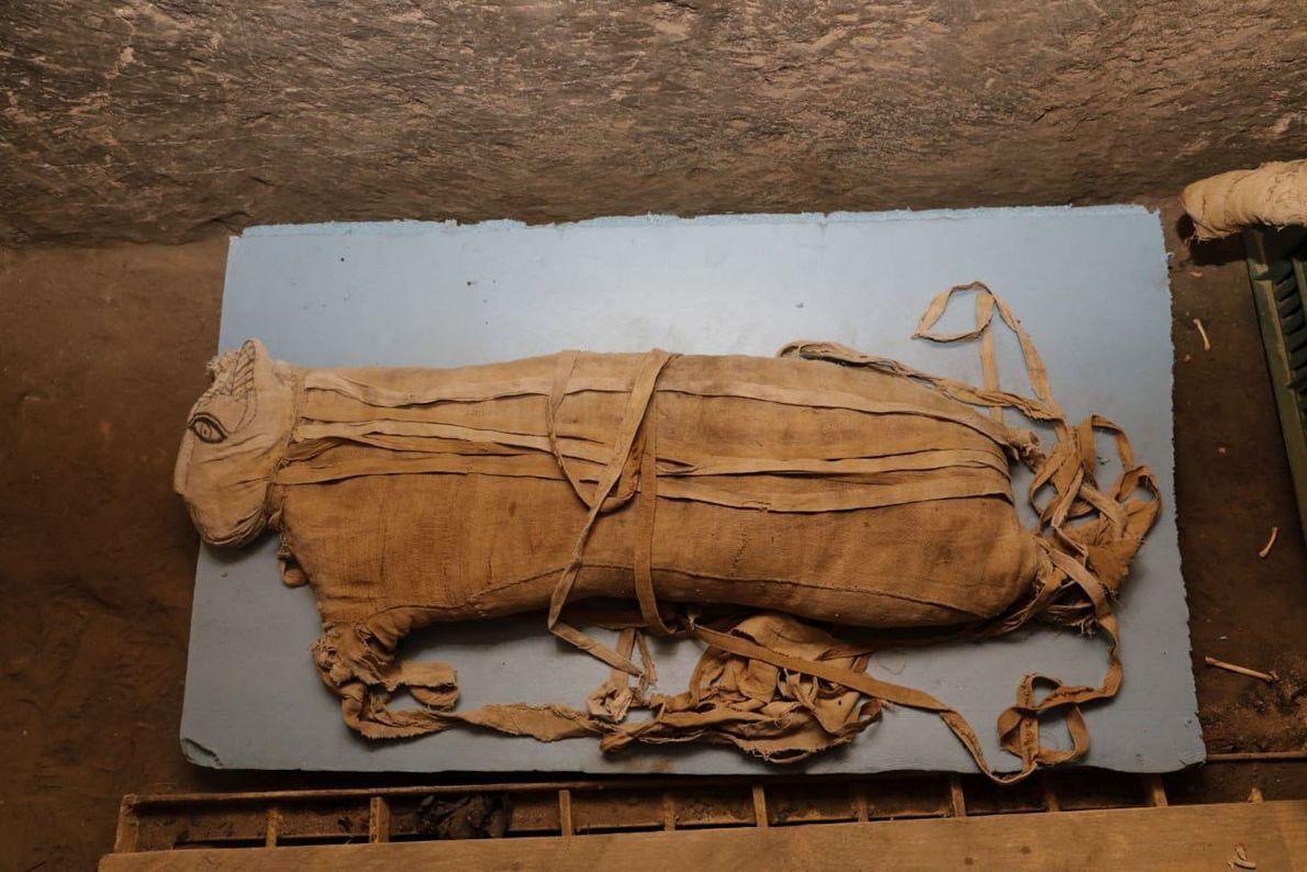 León momificado