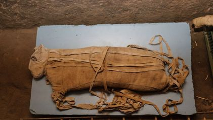 Descubren en Egipto momias de león muy poco comunes