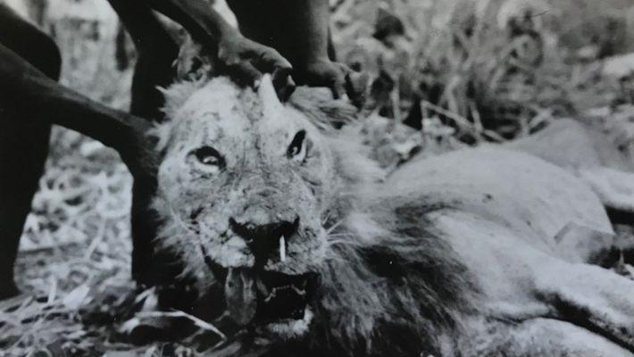 El «devorador de hombres de Darajani»
