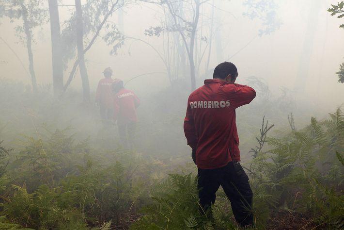 Incendio, Portugal