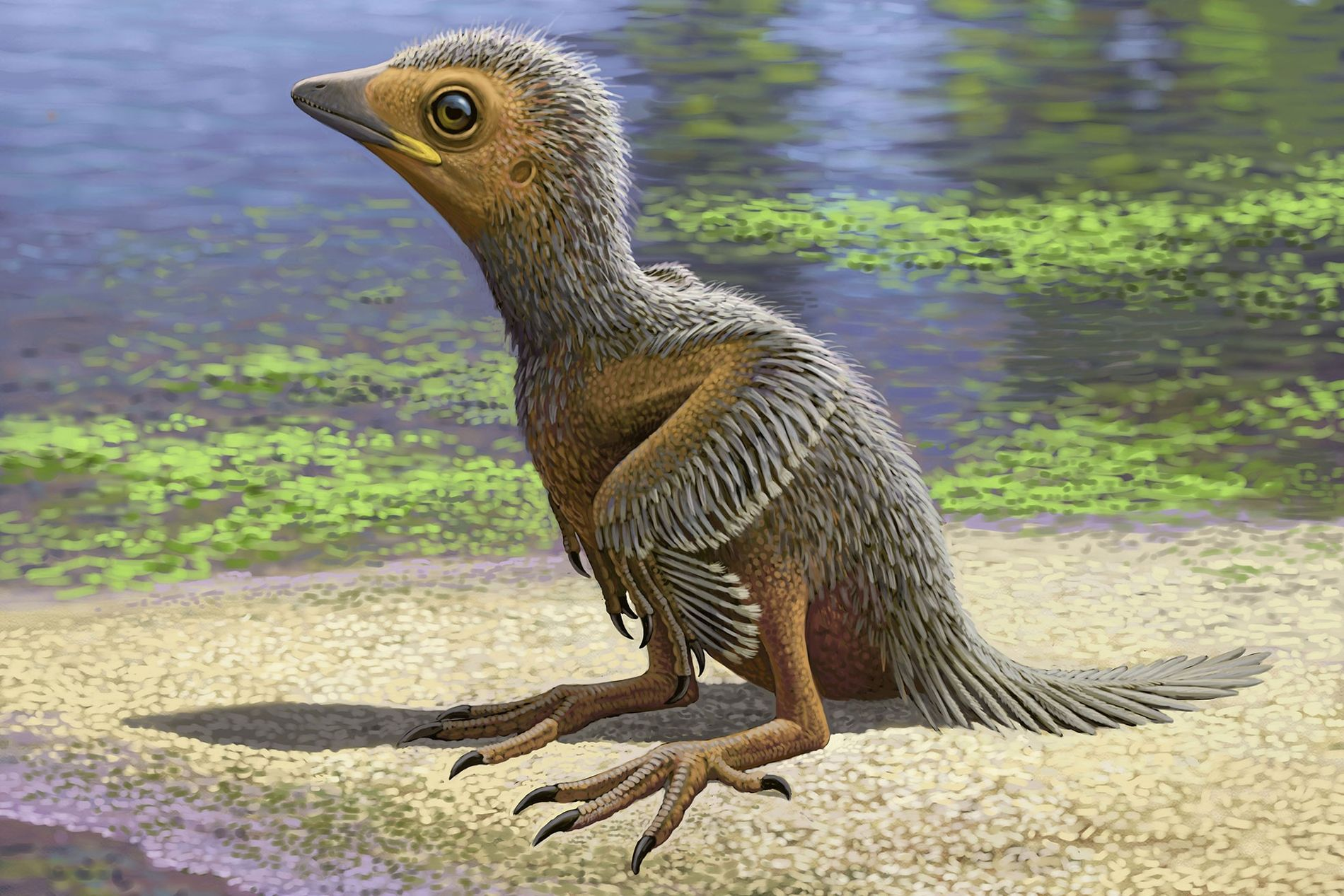 Fósil de ave