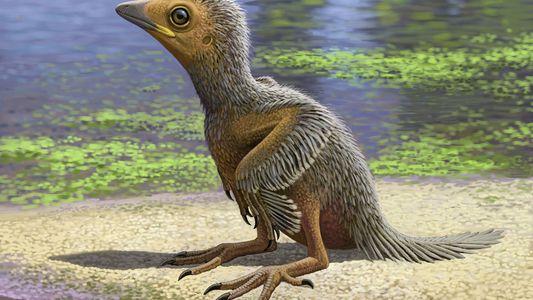 Descubierto en Cuenca el fósil de una cría de ave de 127 millones de años