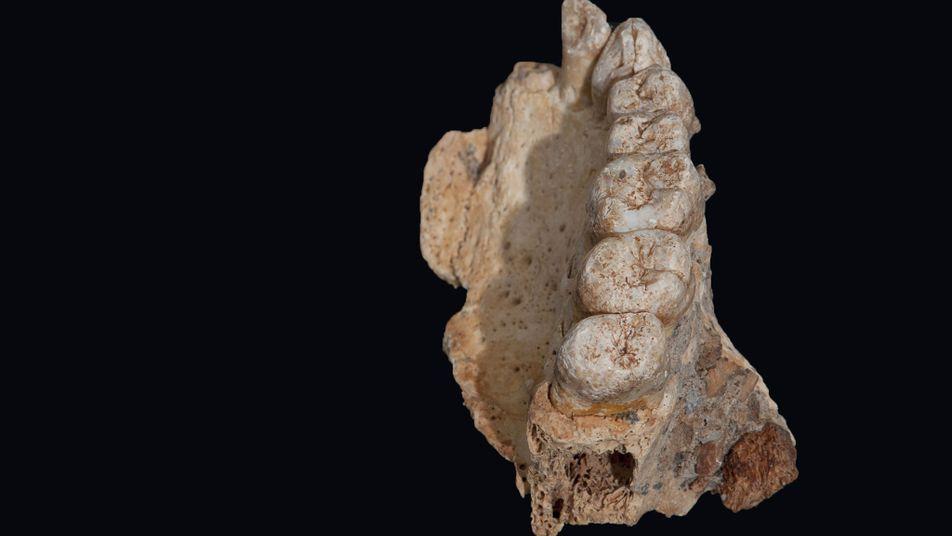 Fósiles humanos descubiertos en Israel