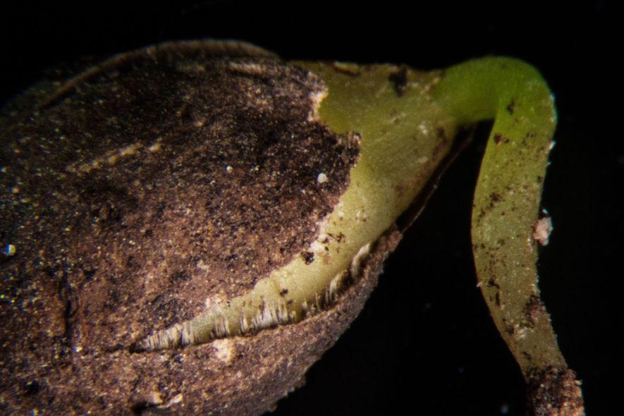 La historia del árbol más solitario del mundo