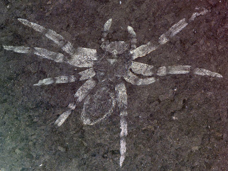 Descubren en Corea del Sur arañas fosilizadas con ojos que «brillan»