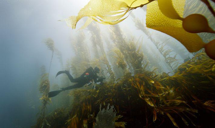 Un buzo de la expedición de Pristine Seas