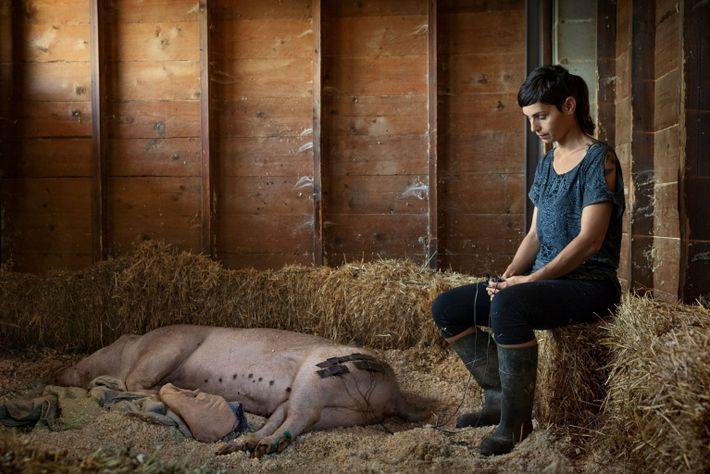Olivia Gómez trata a un cerdo llamado Paola con electroterapia