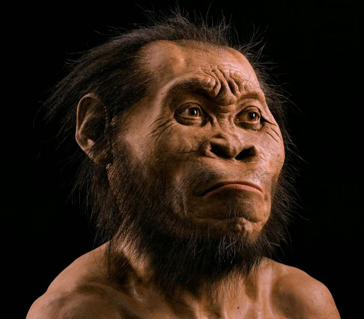 Un nuevo antepasado humano.