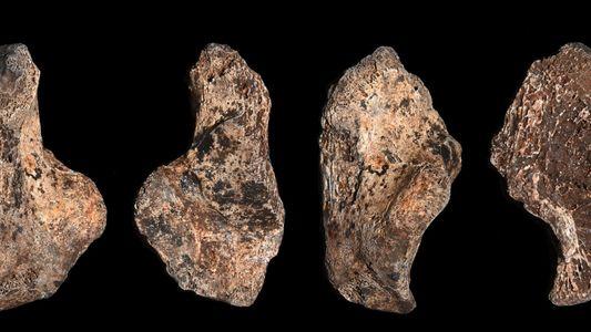 Fósiles de un Homo naledi juvenil